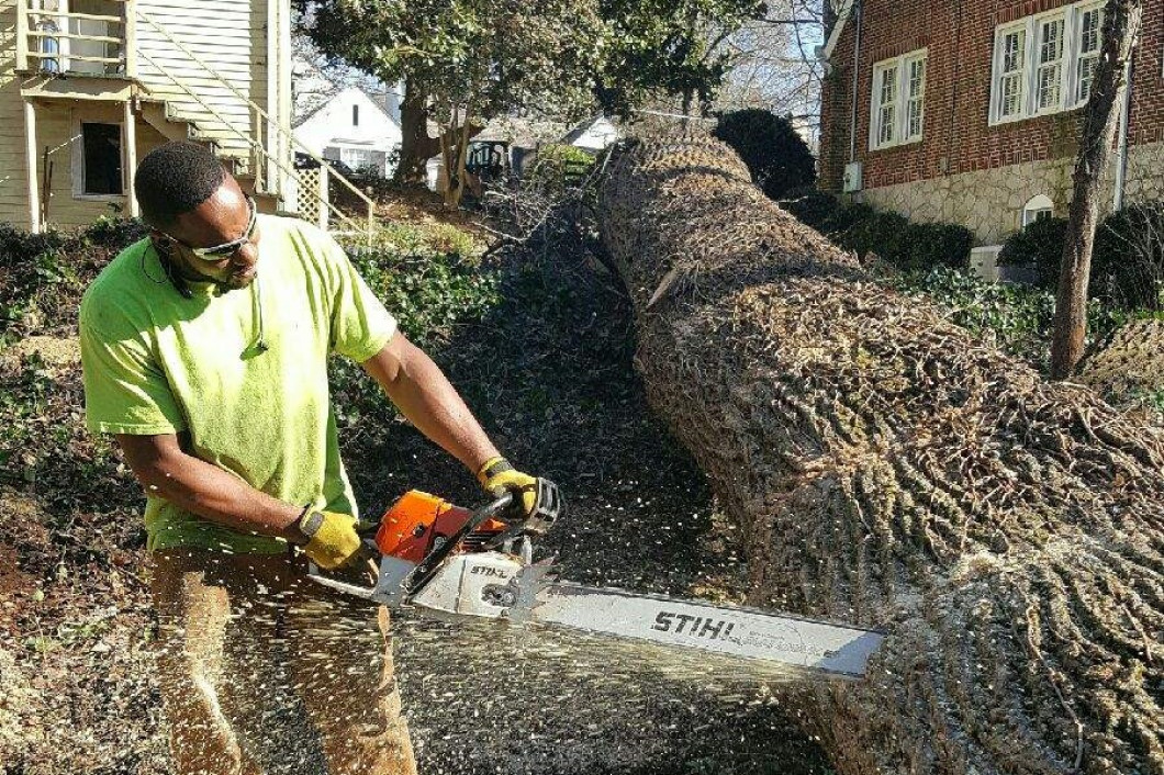 Get Rid of Dangerous Trees Right Away, call One Source Tree Service